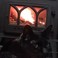 猫のストーブ見張り番