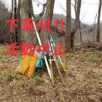 滝山城跡 下草刈り3月は中止です