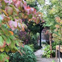秋の庭に思う