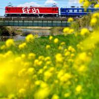 快速 花めぐり号 12系返却回送列車(東北本線)。