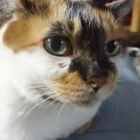 猫ちゃんたちに癒されて(⋈◍>◡<◍)。✧♡