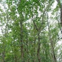 青富士と白猫と森の緑