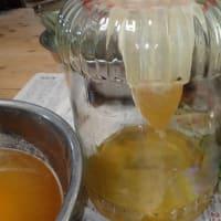 昨日採蜜した日本ミツバチの蜂蜜は約7キロもとれました。
