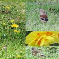 花園の小鳥
