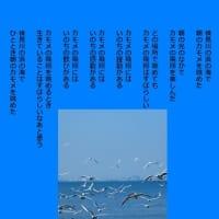 朝の海 カモメの飛翔