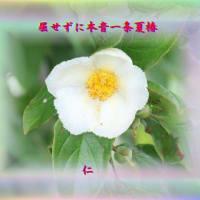 『 屈せずに本音一条夏椿 』瘋癲老仁妄句zqs2002