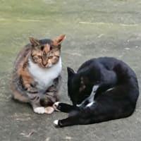 猫ちゃん兄妹の戯れ(下)