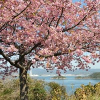 春の花探し~河津桜・下松市笠戸島