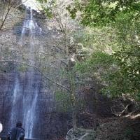 清滝の静かな流れと 可愛いネコノメソウ など ~ くじゅう方面 早春の花(4)