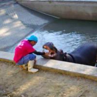 熊本水辺動物園 回転木馬