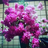 お花を活ける