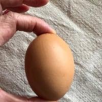 不揃いな卵たち、色黒 ずん胴、大小取り混ぜてパック入り