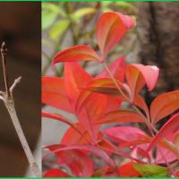 庭木の冬色