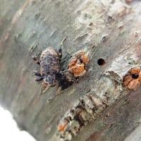 探索で出会った昆虫たち