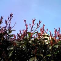 春陽 03-10-07