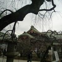 雑詠・花街新春おどり・Ⅱ