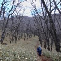 霧ヶ峰観音沢古道と高山植物の話題は、コーヒー配達の途中で。