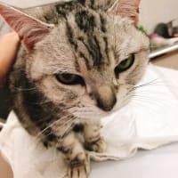 ● ARどうぶつ病院です。美人な猫ちゃん🐱