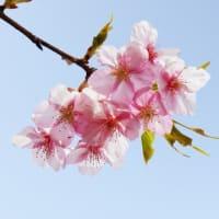 東戸塚はくば整骨院は祝日・土曜日も診療しております!