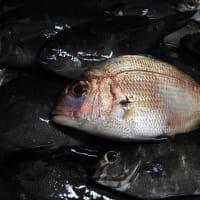 名護屋漁港での釣り