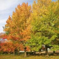 19-10-20 里の秋
