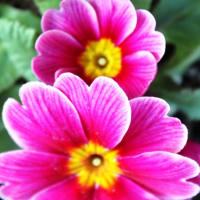 早春を告げる花‥②