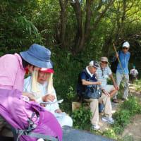 第215回歩こう会2019年(令和元年)8月11日 JR曽根から日笠山62m高さ登山縦走