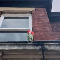 生命力の強さ!壁の花、頭上の自己主張