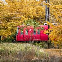 銀杏と名鉄電車