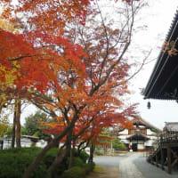 妙顕寺の紅葉なごり