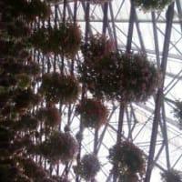 「掛川花鳥園」に行きました。2