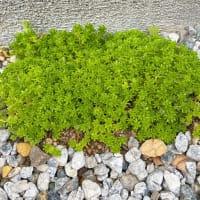 かわいい植物たち