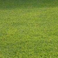 庭の芝生をきれいに育てたい!