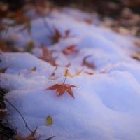 紅染めの雪、山の冬