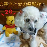 晩秋の寒さ…(´-`) ンー  夏の名残の台風20号…