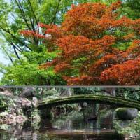 岐阜公園の新緑 緑陰