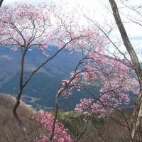 日光の花の咲き具合を偵察   鳴虫山 鉢石山観音寺から