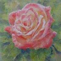 水彩お絵描き思い出めくり№147「薔薇」