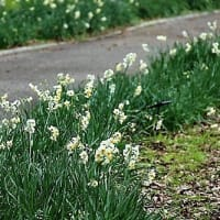 長居植物園の花々