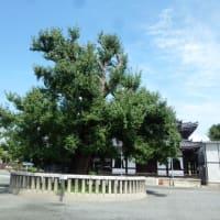 お盆のお参りは、京都の「西本願寺」です。