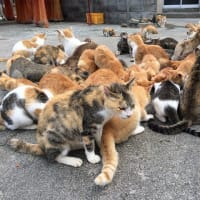 日本一の猫の島=愛媛県の青島