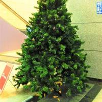 すばるクリスマスツリーコレクション