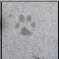 軽井沢のいろいろ 軽井沢に住む「 川上犬 」が・・