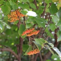 秋の花(続)~~