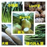 段ボールいっぱいのお野菜。