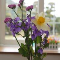 ハナダイコンの花がきれい