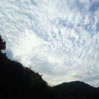 雑草から 残ってるフヨウの花へ 青い空の雲へと 撮影の導線です ♬