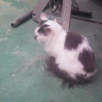 猫が居る暮らし
