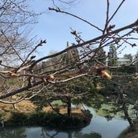 春めいて。
