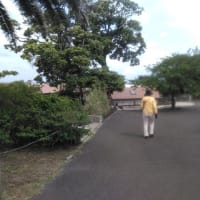 大島ツアー